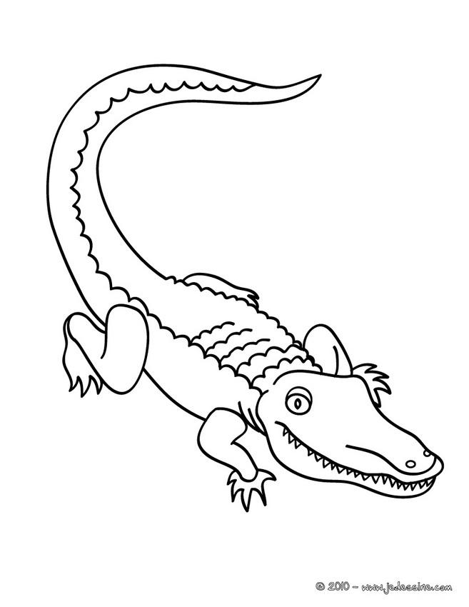Dessin de crocodile a colorier - Image crocodile dessin ...