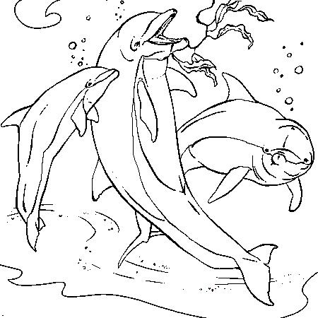 20 dessins de coloriage dauphin en ligne gratuit imprimer for Planificateur facile en ligne gratuit