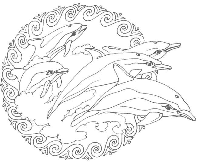 15 dessins de coloriage dauphin mandala imprimer - Dessin a imprimer de dauphin ...