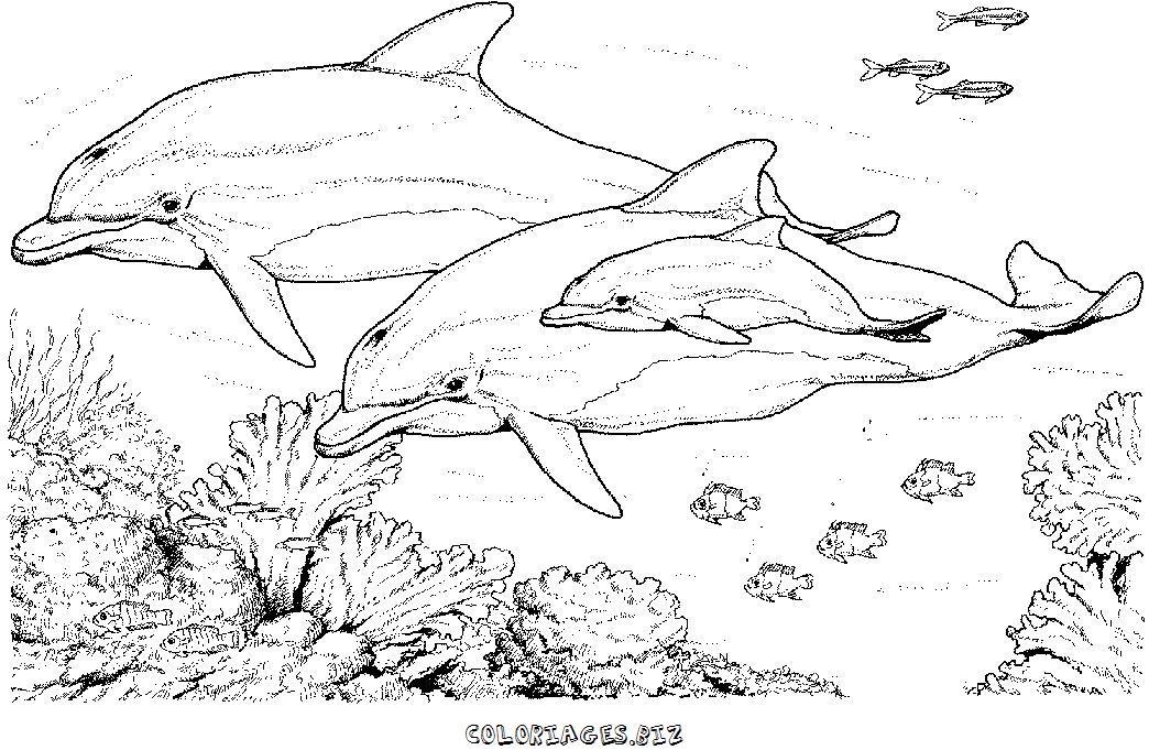 coloriage à dessiner vrac dauphin