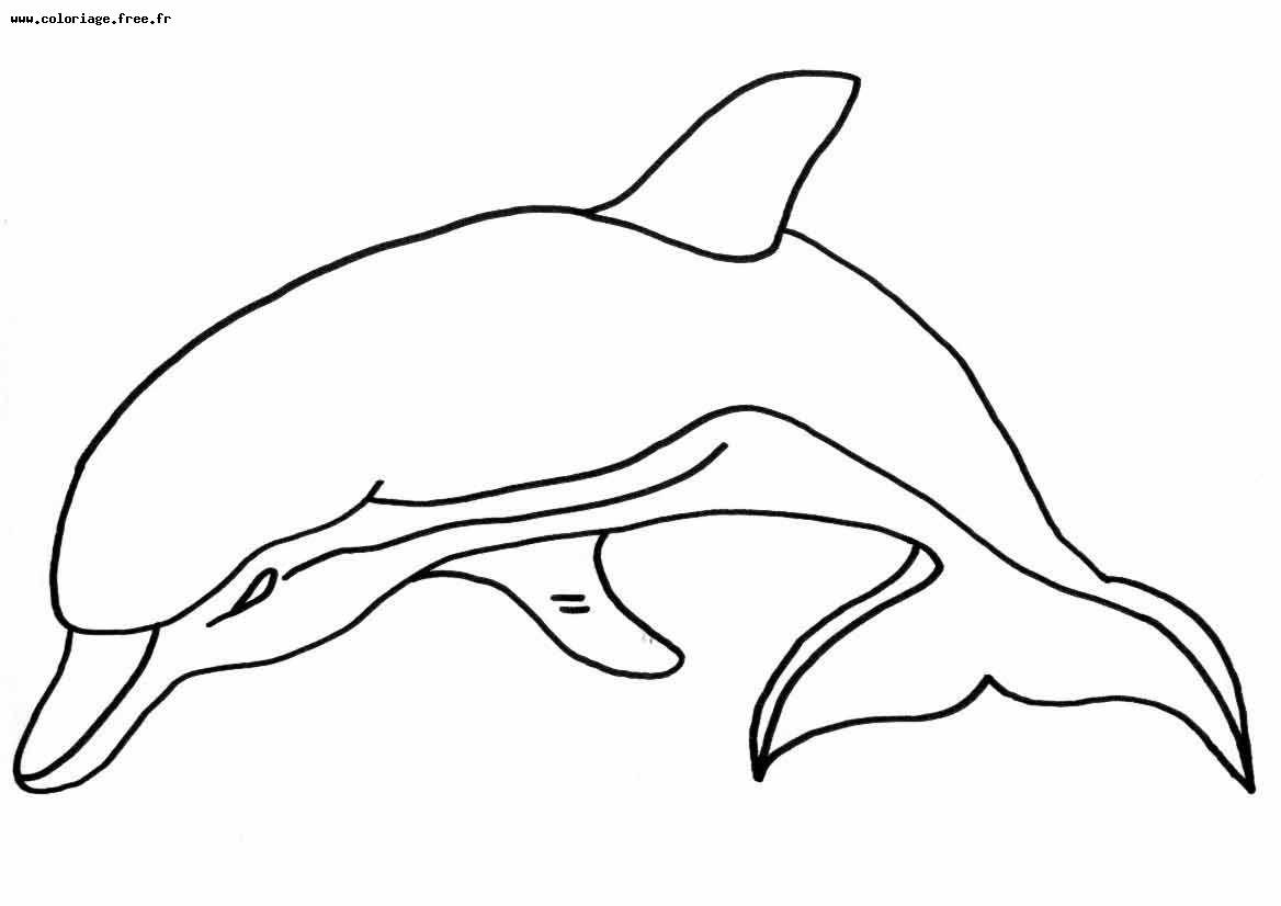 Coloriage dessiner imprimer mandala dauphin - Dauphin a dessiner ...