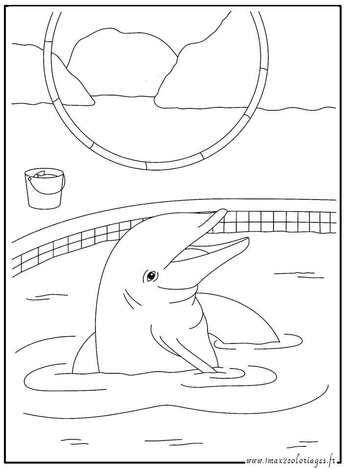 dessin d'un mandala dauphin