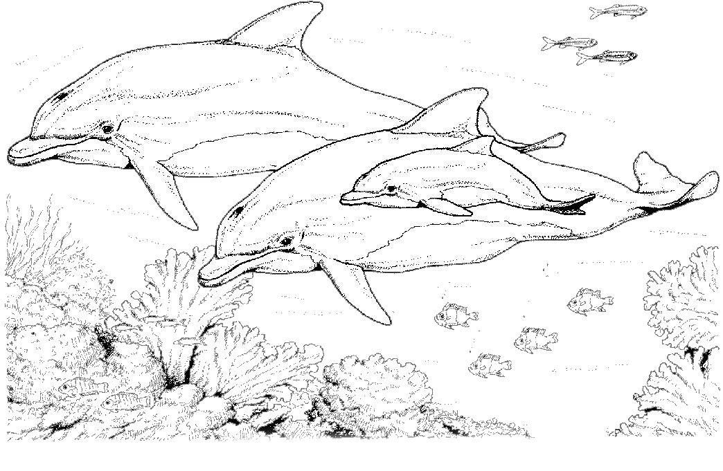 Coloriage petshop dauphin - Petshop gratuit ...
