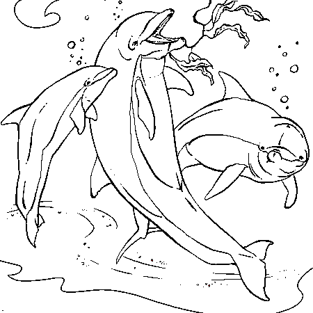 Coloriage dauphin et sirene a imprimer - Dauphin dessin couleur ...