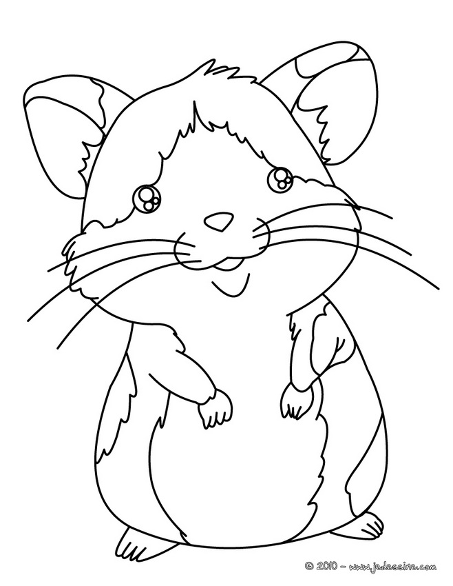 14 dessins de coloriage de hamster russe imprimer - Hamster dessin anime ...