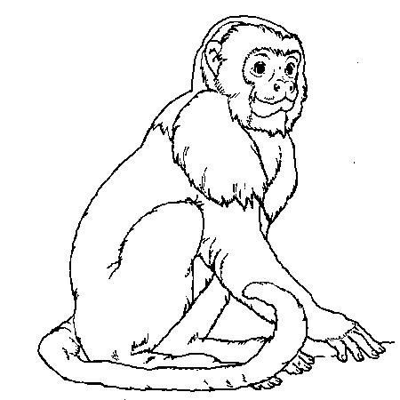 19 dessins de coloriage de singe gratuit imprimer - Dessin guenon ...