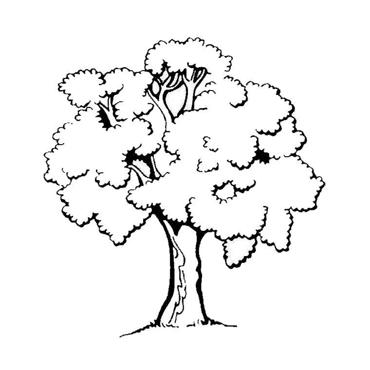 18 dessins de coloriage de tronc d 39 arbre imprimer - Dessin d arbre a imprimer ...
