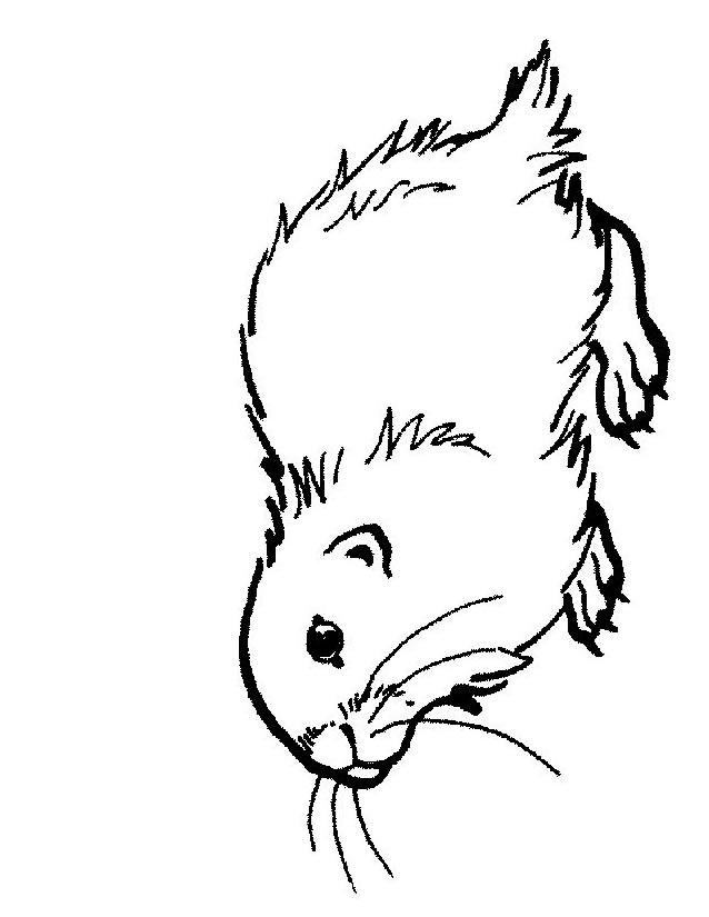 coloriage à dessiner diddl noel