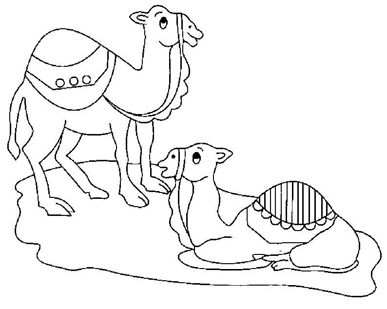 coloriage à dessiner désert dromadaire