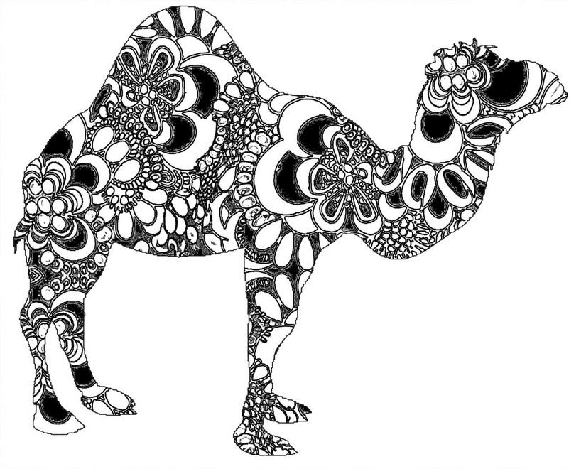 coloriage à dessiner dromadaire chameau