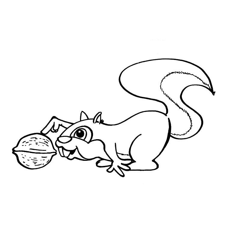 coloriage ecureuil imprimer gratuit