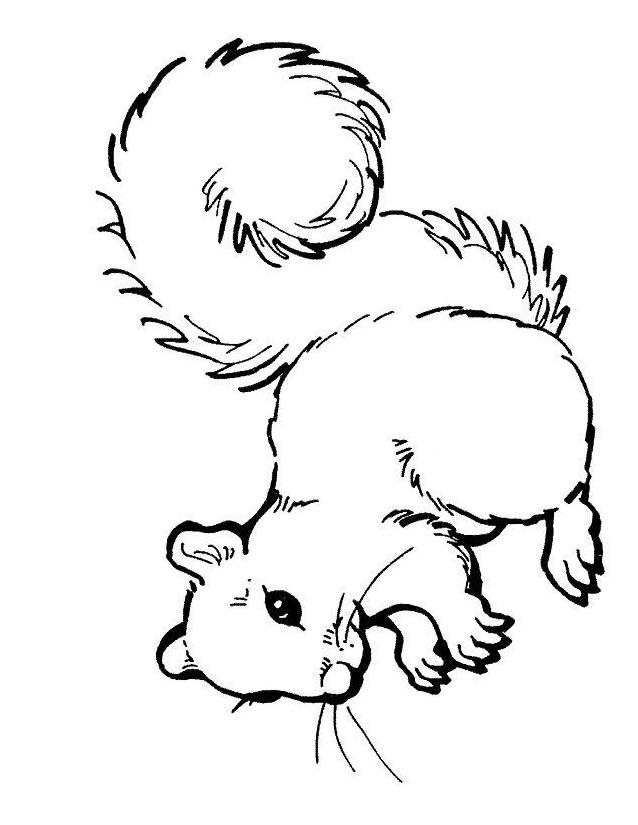Dessin colorier ecureuil noisette - Dessin noisette ...