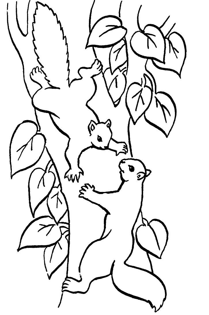 coloriage à dessiner écureuil