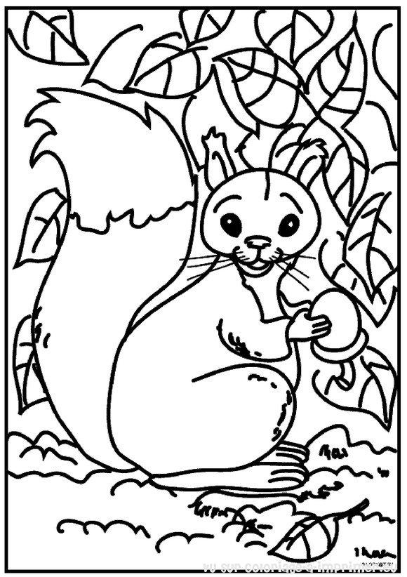 colorier un ecureuil