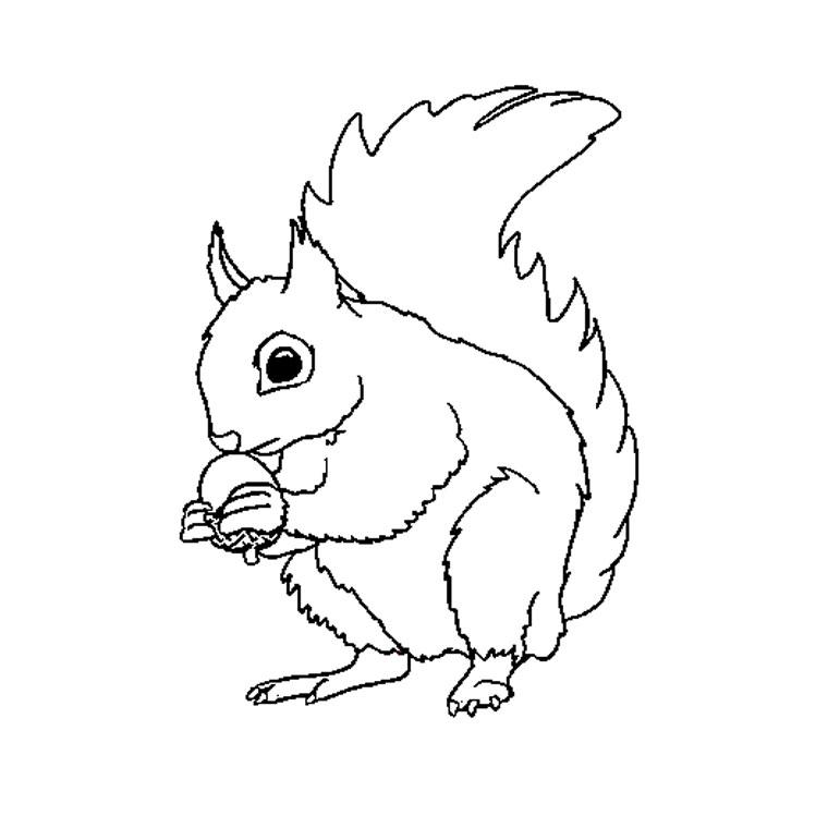 jeux de dessin à colorier d'écureuil