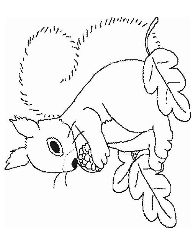 coloriage à dessiner ecureuil noisette