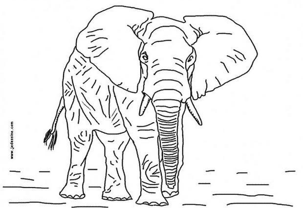image à colorier elephant