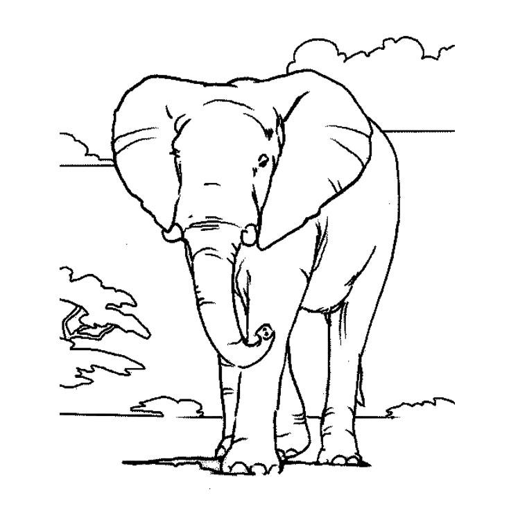 Coloriage Elmer Lelephant A Imprimer.Coloriage A Dessiner D Elmer L Elephant