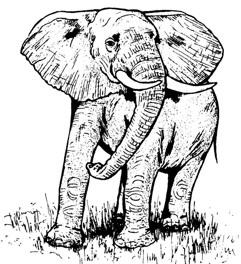 dessin a colorier elephant in n