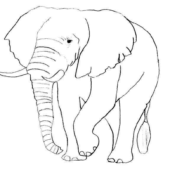 Dessin A Colorier Bebe Elephant