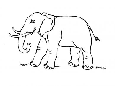 Elephant dessin ligne - Coloriage elmer a imprimer ...