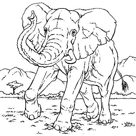 Coloriage elephant d 39 inde - Elephant image dessin ...