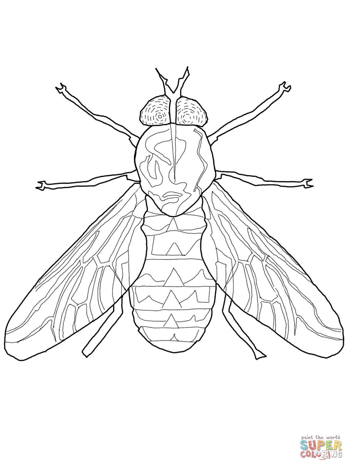 98 dessins de coloriage en ligne mouche imprimer - Coloriages en lignes ...