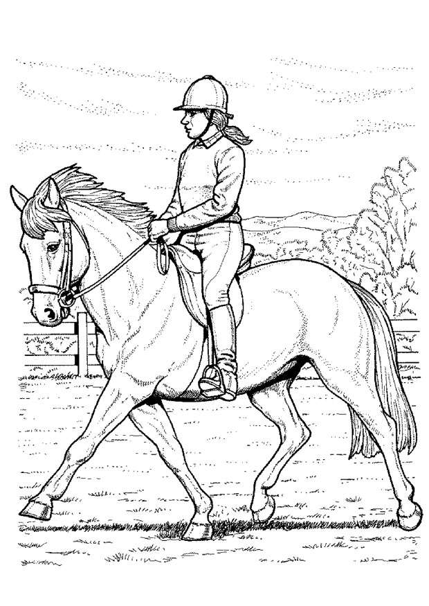 coloriage equitation cheval