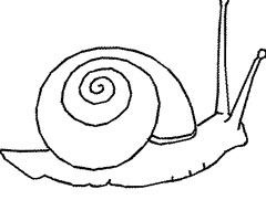 97 Dessins De Coloriage Escargot De Mer A Imprimer