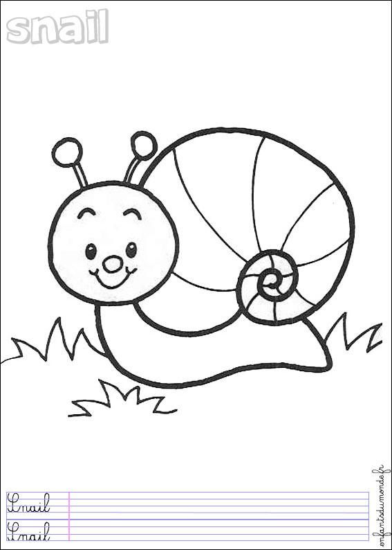 dessin ã colorier escargot fr