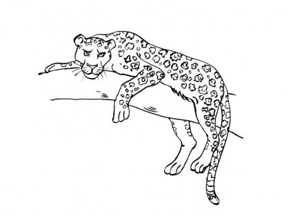 coloriage � dessiner � imprimer felins