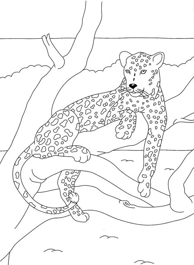 coloriage felin a imprimer
