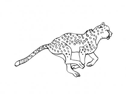 coloriage � dessiner parc des felins