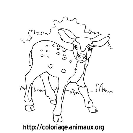 coloriage à dessiner de faon