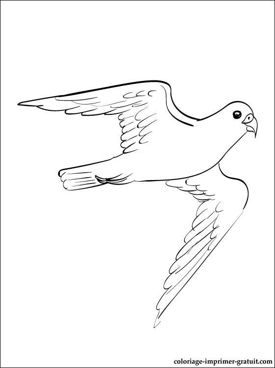 coloriage oeil de faucon