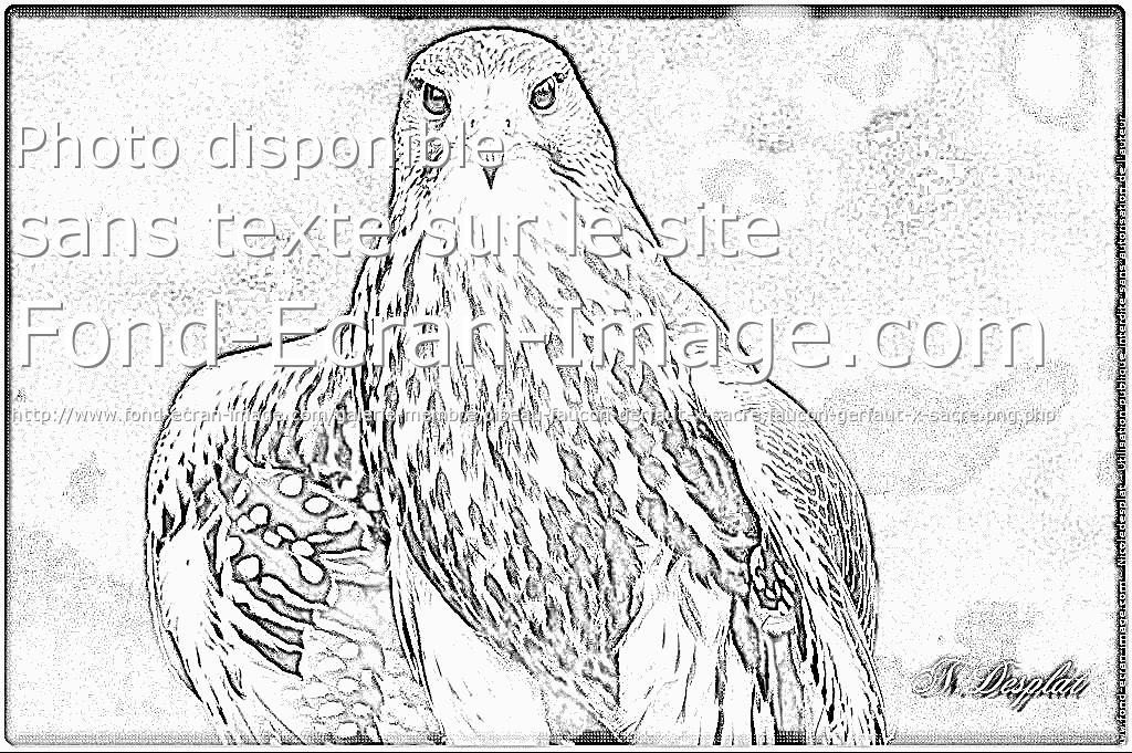 coloriage faucon hobereau