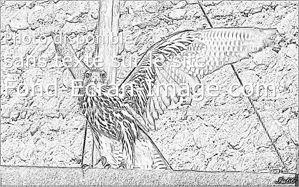 dessin à colorier chevalier du faucon