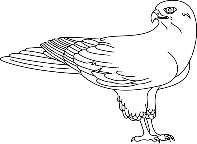 dessin à colorier faucon millenium