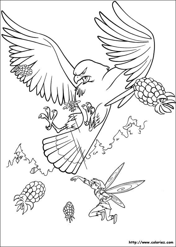 coloriage de faucon