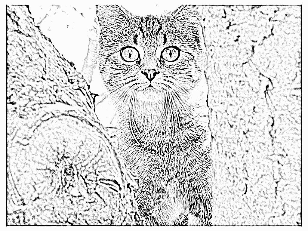 20 dessins de coloriage f lins gratuit imprimer - Dessin imprimer ...