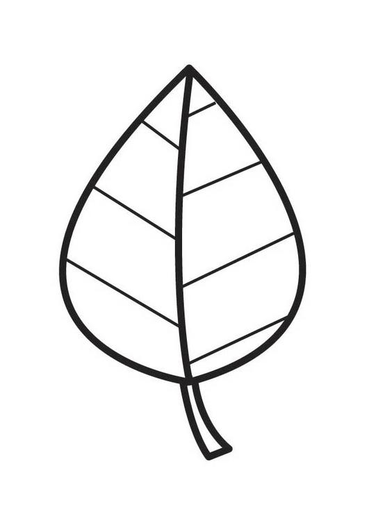 Coloriage dessiner feuille d 39 arbre - Coloriage feuille d arbre ...