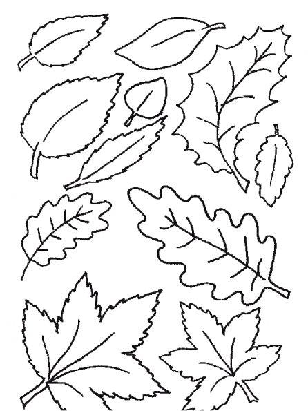 dessin à colorier feuille de palmier