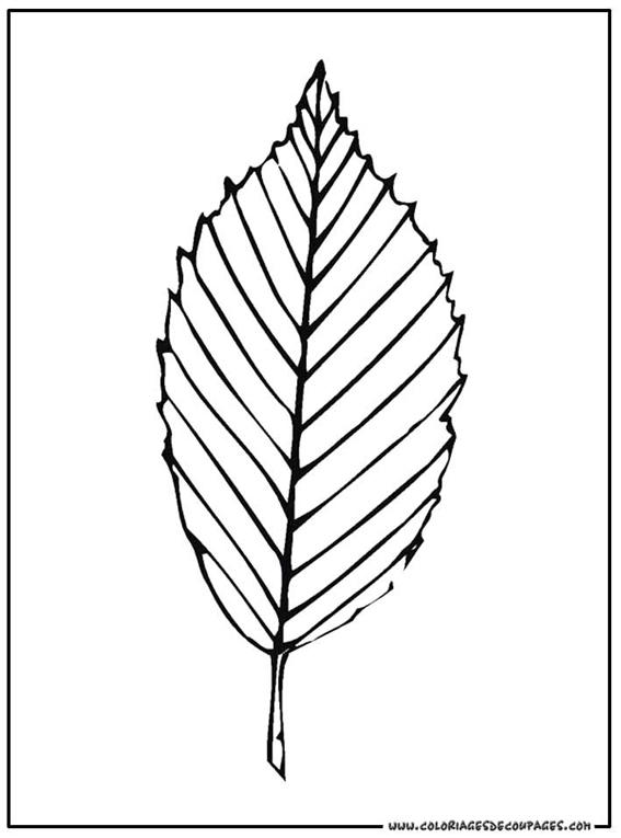 28 dessins de coloriage feuille imprimer - Dessin de rose a colorier ...