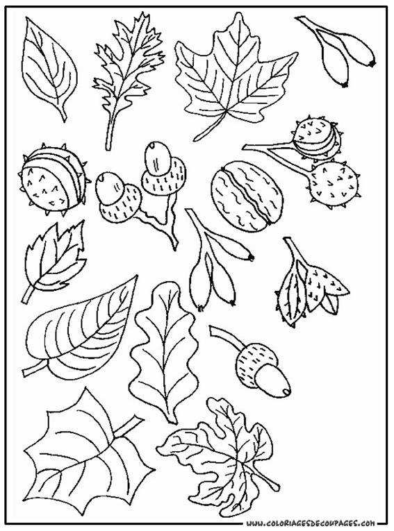 dessin en ligne feuille d'automne