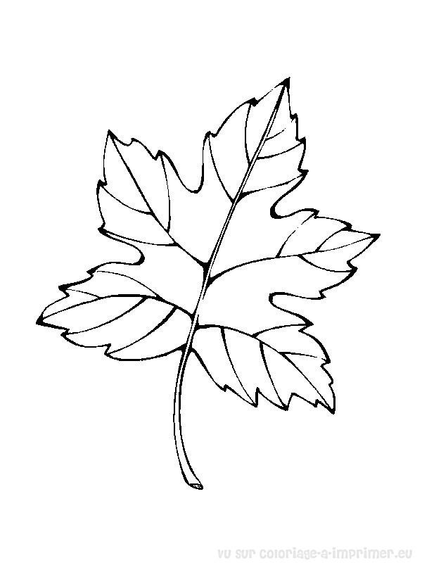 dessin à colorier arbre sans feuille