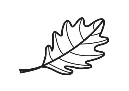 coloriage à dessiner feuille de figuier
