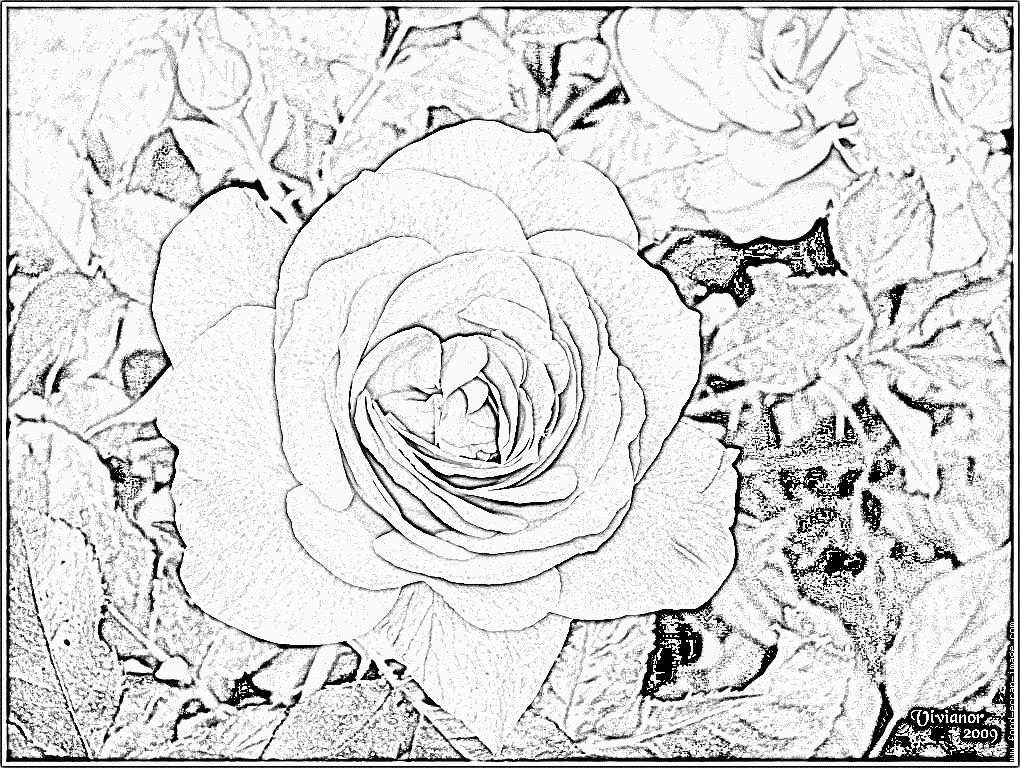 88 dessins de coloriage fleur coeur imprimer - Coloriage de rose ...