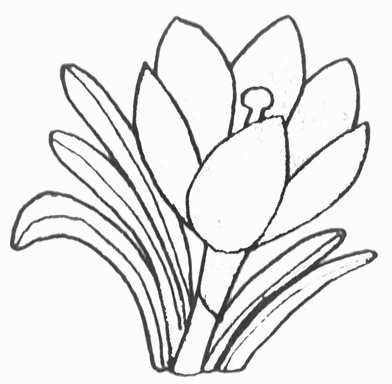 89 dessins de coloriage fleur de lotus imprimer - Coloriage fleur tulipe ...