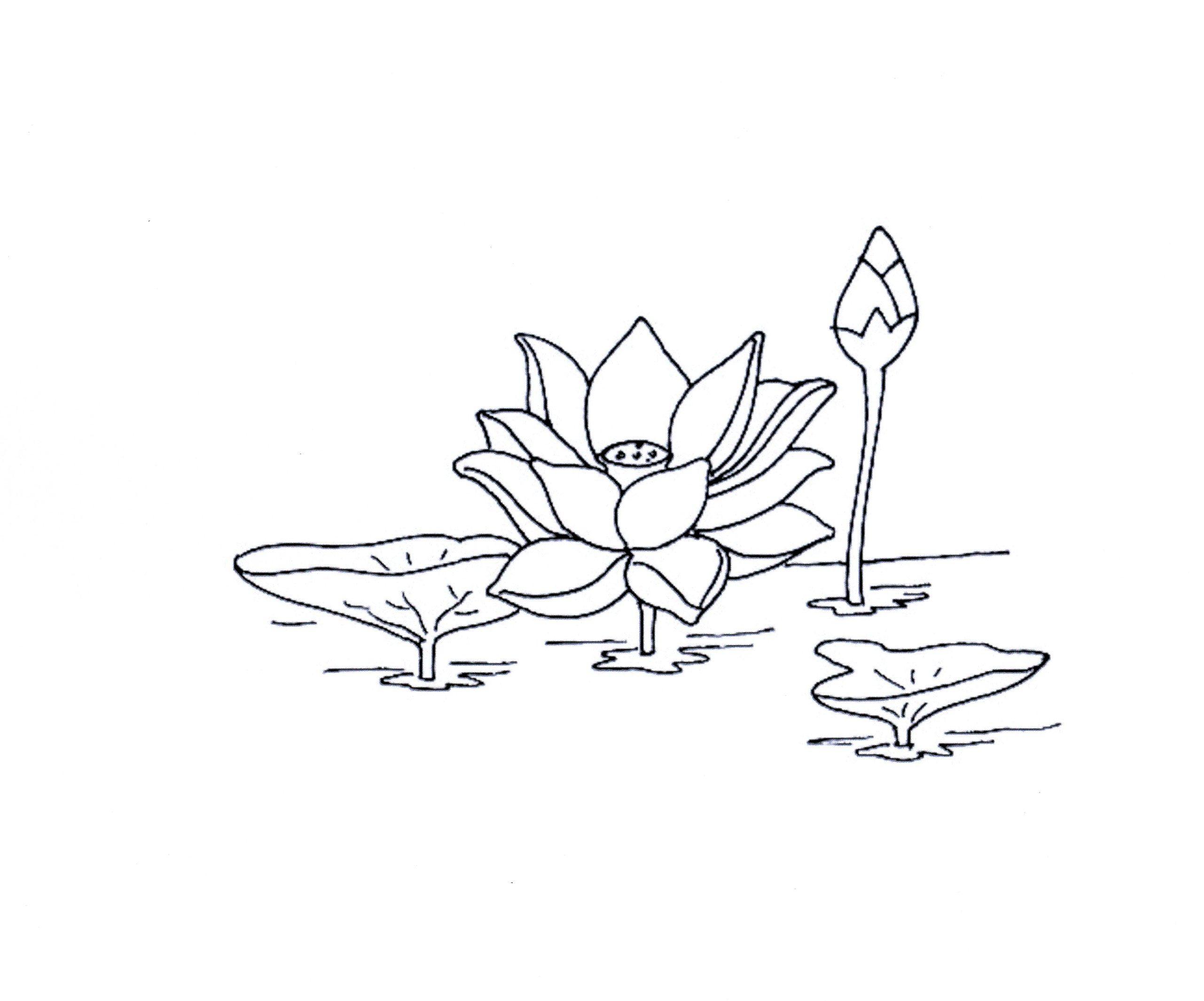 89 dessins de coloriage fleur de lotus imprimer - Dessin de fleur facile ...