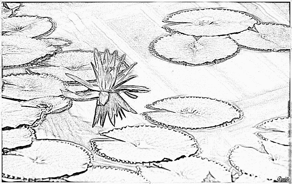 89 Dessins De Coloriage Fleur De Lotus à Imprimer